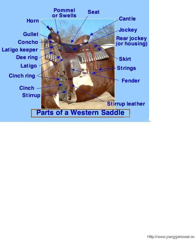 马术鞍具的结构图解